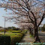 弘学館の春 4月3日(水)